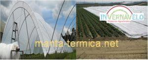 La implantación de una manta térmica es viable tanto en cultivos rústicos como en uno de invernadero.