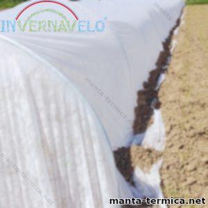 Micro túnel de manta térmica instalado en el campo